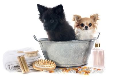 ː洗い桶に入っている二匹の犬