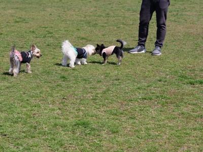 飼い主の足元で挨拶する犬たち