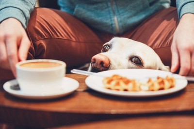 ワッフルと犬