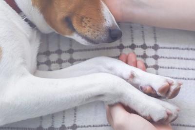寝ている犬に寄り添って手を取る飼い主