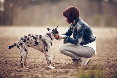 女の子と犬