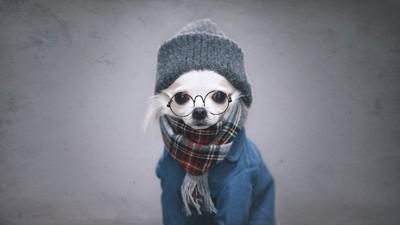 眼鏡と服を着ている犬