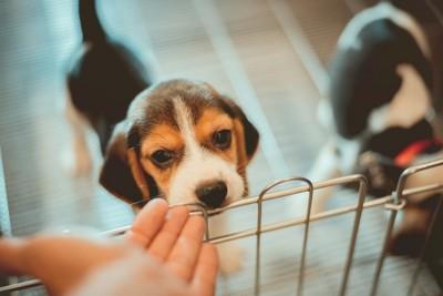 手のニオイを嗅ぐ犬