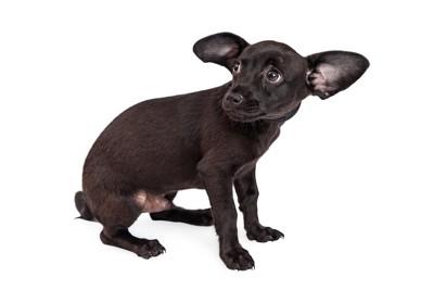 尻尾を丸めて怯える犬