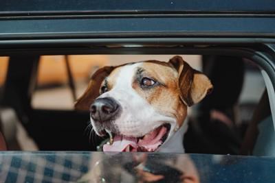 自動車の中に座っている犬