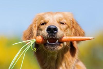 にんじんをくわえる犬