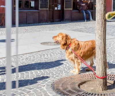 街路樹に繋がれている犬