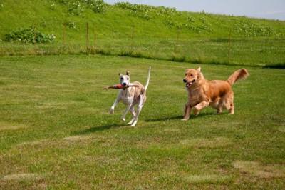 追いかけっこする犬
