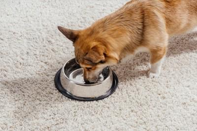 ステンレスの器で水を飲む犬