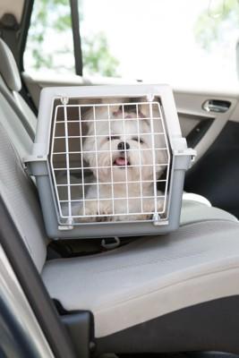 車に乗る子犬