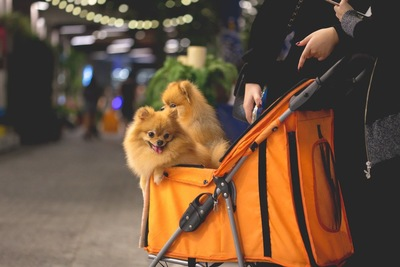 バギーに乗っている2匹の子犬