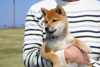 外で抱っこされる柴犬