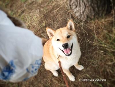 笑顔で座っている犬