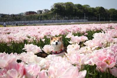 花に囲まれる犬