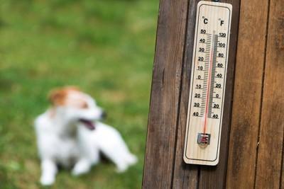 温度計とと犬