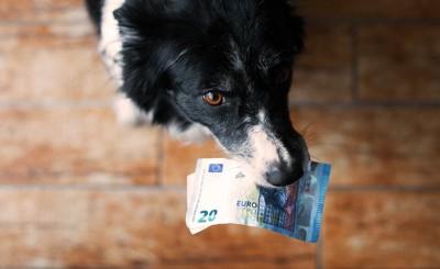 お金をくわえる犬