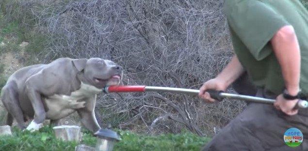抵抗する犬