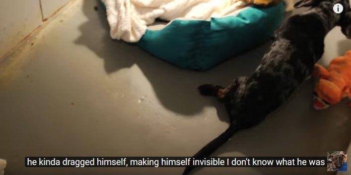 足を引きずって逃げる犬