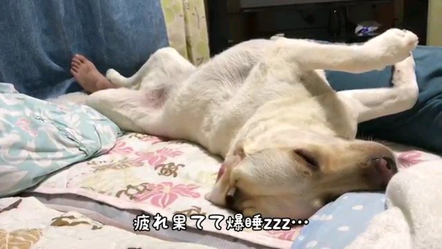 疲れ~字幕