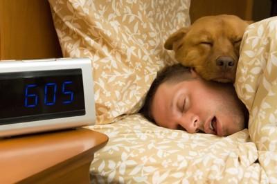 男性に顎を乗せて寝る犬