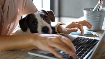 仕事中の人と犬
