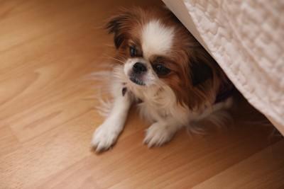 家具の下に隠れている犬