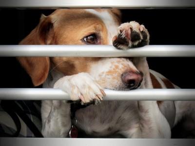 柵の中から手を出して外を見る犬