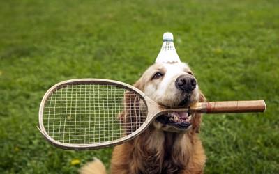 バトミントンと犬