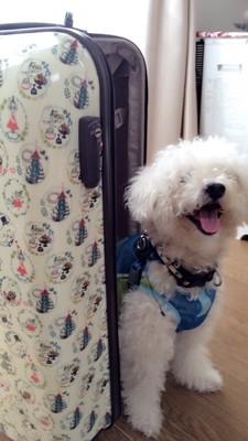 スーツケースの中から出てくる犬