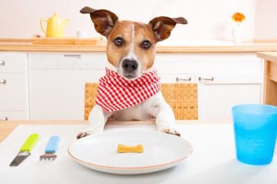 テーブルに置かれたおやつと席に着く犬
