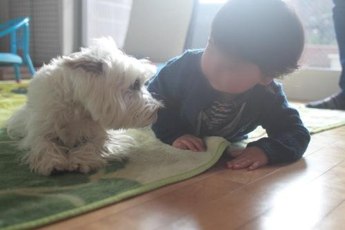 幼児と見つめ合う愛犬