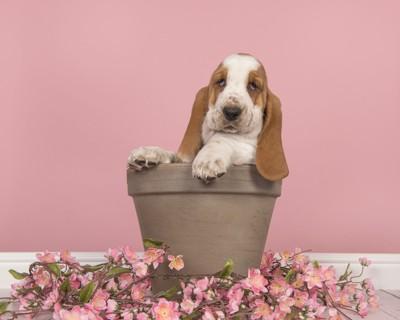 植木鉢に入った犬と落ちた花びら
