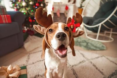 トナカイの耳を付けた犬