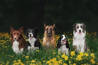 花畑で並んでお座りする5匹の犬