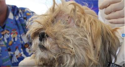 毛が固まって目が隠れている犬