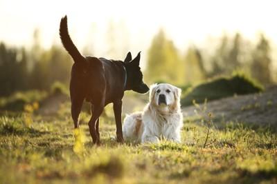 伏せる犬とニオイを嗅ぐ犬