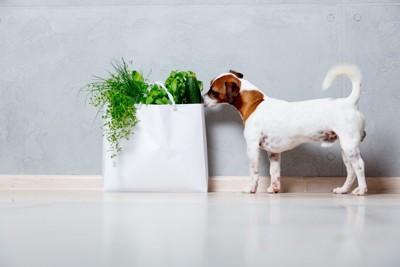 草の入った紙袋の匂いを嗅ぐ犬