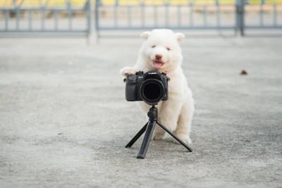 カメラに手を乗せる子犬