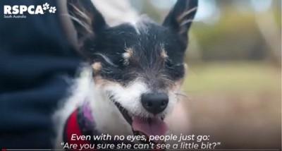 目を閉じた犬のアップ