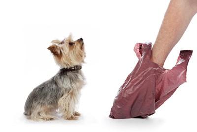犬とうんちを拾っている手