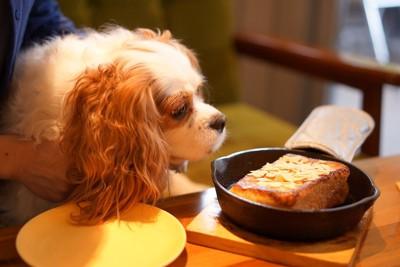 テーブルの上に置かれた食事を欲しがる犬