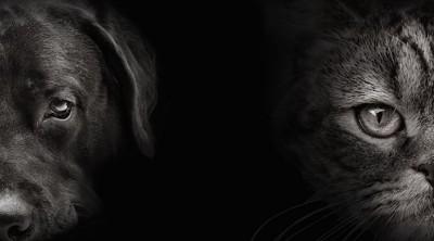 暗闇の中の犬と猫の顔アップ