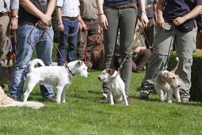 犬友だちの集まり