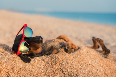 サングラスをかけて砂浜で仰向けに寝ている犬