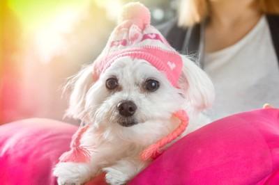 ピンクのニット帽