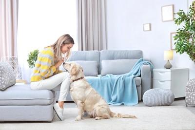 ソファーに座る飼い主の前に座る犬