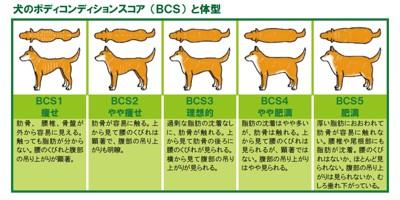 BCSの表
