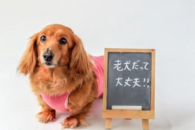 ダックスと「老犬だって大丈夫!」と書かれたボード