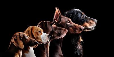 暗い場所に居る犬たち