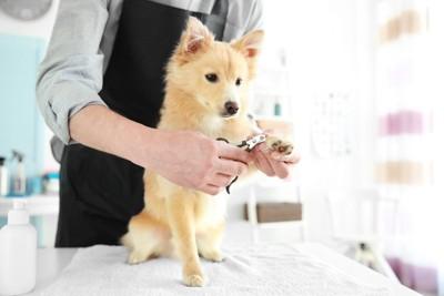 爪切りをする犬、黒いエプロン姿の人